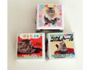 田邉さんの猫